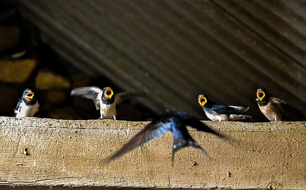 Swallows, Llety Farm, St Davids, Pembrokeshire
